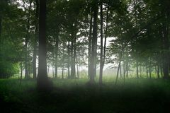 Magic forest trees fog Royalty Free Stock Image