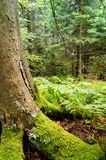 The magic forests. Of Mundster France Royalty Free Stock Photos