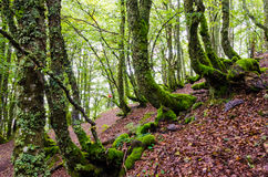 The magic forests stock images