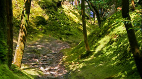 Magic garden. Forest in Japan royalty free stock image