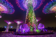 Magic garden at night, Singapore Royalty Free Stock Image