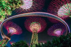 Magic garden at night, Singapore Royalty Free Stock Images