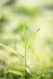 Magic grass Royalty Free Stock Image