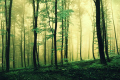 Magic green colored forest Royalty Free Stock Photos
