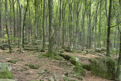 Magic green forest Royalty Free Stock Images