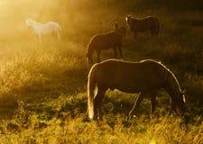 Magic herd Stock Image