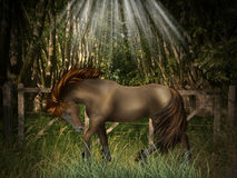 Magic Horse. In a field Royalty Free Stock Image