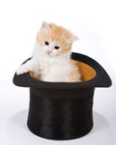 Magic kitten Stock Photos