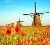 Magic landscape with a field of poppies and wind Mills on a sunn Royalty Free Stock Photography