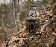 Magic lantern in the forest Royalty Free Stock Photography