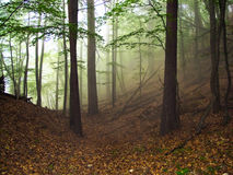 Magic light. Misty light in green wood Royalty Free Stock Photography