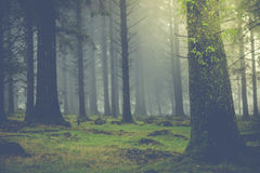 Magic light in autumn forest with fog Stock Photo