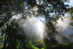 Magic light beams Stock Photography