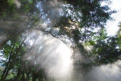Magic light beams Stock Photo
