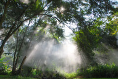 Magic light beams Royalty Free Stock Image