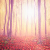 Magic light forest Royalty Free Stock Photography