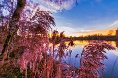 Magic light during sundown on a warm February evening with vivid warm light, deep blue sky and sun rays at a German. Small lake royalty free stock photo