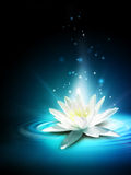 Magic lily Stock Photo