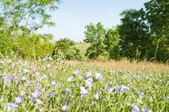 Magic meadow Stock Images