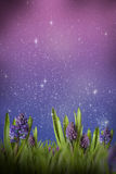 Magic meadow Royalty Free Stock Image