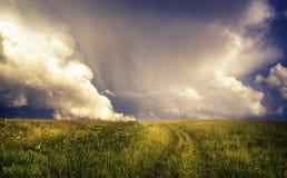 Magic meadow Stock Photography