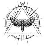 Magic moth with a pattern in the form of a human skull.  Royalty Free Stock Photo