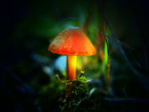 Magic mushroom Stock Images