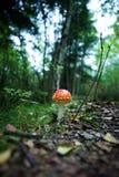 Magic Mushroom Royalty Free Stock Images