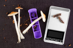 Magic mushroom medicine. Magic mushroom medicine, digital scale and pill organizer, microdosing on black background, from above. Psychedelic mushrooms, top view Stock Images