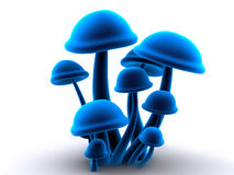 Magic mushrooms Stock Photos