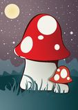 Magic Mushrooms Stock Photo
