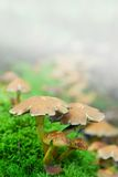 Magic mushrooms fog Stock Photo