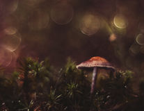 Magic mushrooms Royalty Free Stock Images