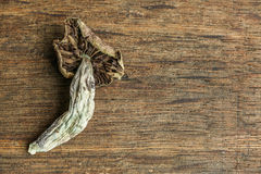 Magic Mushrooms on Wood Stock Photography