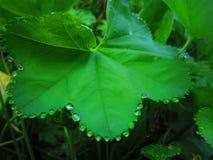 Magic nature. Magic green Stock Photos