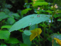 Magic nature. Magic green Stock Photography