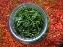 Magic nature. Magic green tea  on Stock Photography