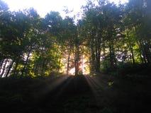Magic nature. Magic green trees on dawn Royalty Free Stock Photo