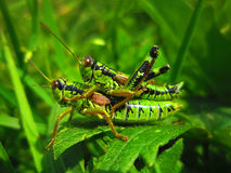 Magic nature. Small insects in the wild Stock Image