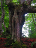 Magic nature. Magic tree among the dark forest Stock Image