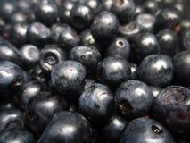 Magic nature. Magic, useful, wild berries - blueberries Royalty Free Stock Photos