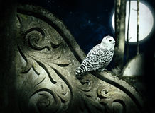 Magic night. Magic moon night in forest with ancient decorated wall and white owl Royalty Free Stock Photo