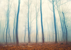 Magic orange blue forest scene Royalty Free Stock Photography
