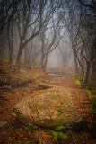 Magic Path. The fog settled in on Craggy Garden Trail on an autumn day. All the colors combined with the misty evening gives this scene an eery yet magical feel royalty free stock photography