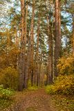 Magic picturesque path in the autumn forest.  Royalty Free Stock Image