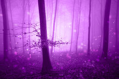 Magic pink forest fairytale with fireflies. Magical pink colored foggy forest fairytale with fireflies bokeh. Fantasy colored autumn woodland. Color filter royalty free stock image