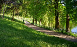 Summer landscape. Alley in the park. Magic place. Relaxation corner Royalty Free Stock Photo