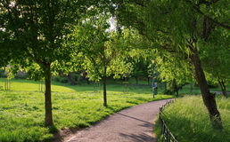 Summer landscape. Alley in the park. Magic place. Relaxation corner. Summer landscape. Alley in the park. Magic place and relaxation corner Stock Image