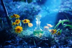 Magic potion in bottle in forest. The magic potion in bottle in forest stock images