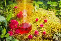 Magic potion in bottle in forest. The magic potion in bottle in forest royalty free stock photo